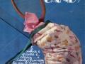 candy-candy-articolo-pubblicita-catalogo-6